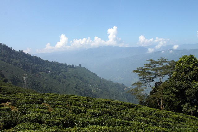 Darjeeling Hillside India West Bengal. Photo by flowcomm. License: CC BY 2.0.